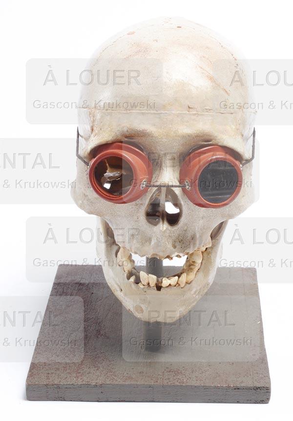 Crâne sur socle 2