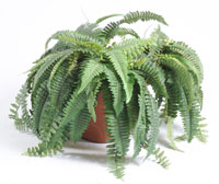 Bambou fausse plante verte gascon krukowski for Plante fausse